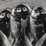 Three Fish, Yugawara, Japan 1974