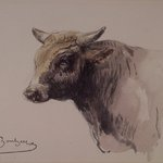Head of a Bull