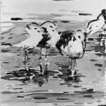 Sea Gulls, Santa Barbara