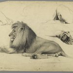 Studies of a Lion