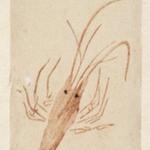 E-Goyomi (Red Lobster)