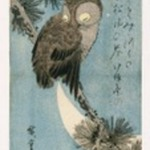 Owl on a Pine Branch