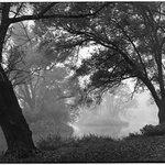 Fog Tapestry