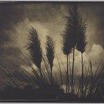 Sky Brooms