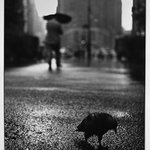 Pigeon in the Rain on Herald Square