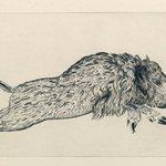 Wild Boar (Le Sanglier)
