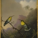 """Two Humming Birds: """"Copper-tailed Amazili"""""""