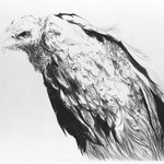 Vulture II