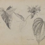 Plant Study