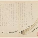 Seaweed and Shellfish