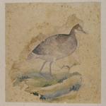 A Bird, Perhaps a Grouse