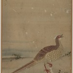 Chinese Pheasant, Album Leaf Painting