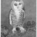 [Untitled] (Owl)