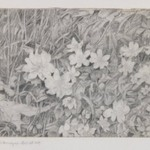 Anemones (Grasses and Flowers)