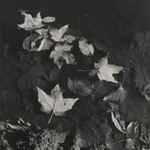 [Untitled] (Leaves Floating in Water)