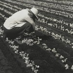 [Untitled] (Field Worker)