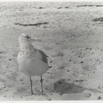 [Untitled] (Bird)
