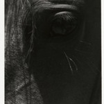 [Untitled] (Horses Eye)