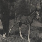 [Untitled] (Foal)