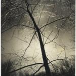 [Untitled] (Ice Morning, Putnam Pond)