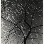 [Untitled] (Ice Storm)