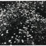 [Untitled] (Flowers)