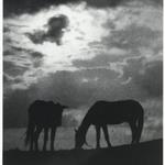 [Untitled] (Horses)