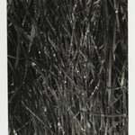 [Untitled] (Dew on Grass)