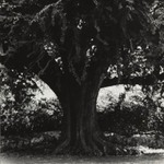 [Untitled] (Tree)