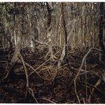 Mangrove Swamp Lightning, Matheson Hammock, Florida