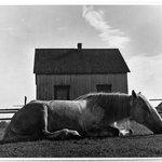 """Horse. Gaspe"" Canada"