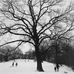 Winter '83 (Prospect Park)