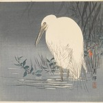White Heron at Waters Edge