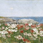 Poppies on the Isles of Shoals
