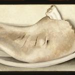 Rib and Jawbone (recto) and Tulip (verso)