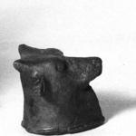Small Head of a Bull