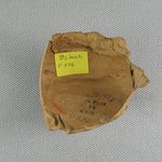 Large Sherd