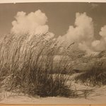 Reeds and Sand