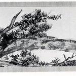 Crane, Pine Tree and Rock
