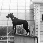 """Security Dog"", Pennsylvania"
