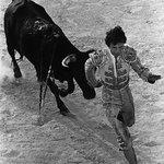 """""""Matador"""" Yucatan"""