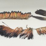 Ornamental Feathers