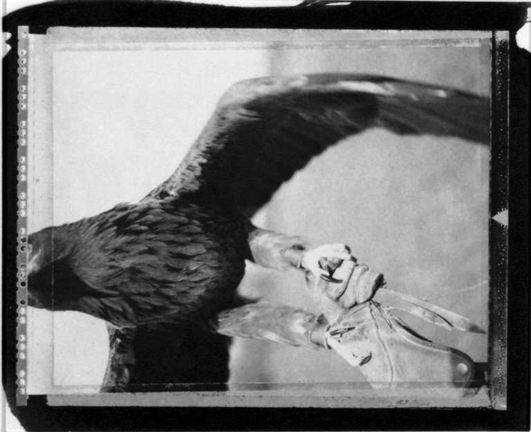 Brooklyn Museum: [Untitled] (Eagle)