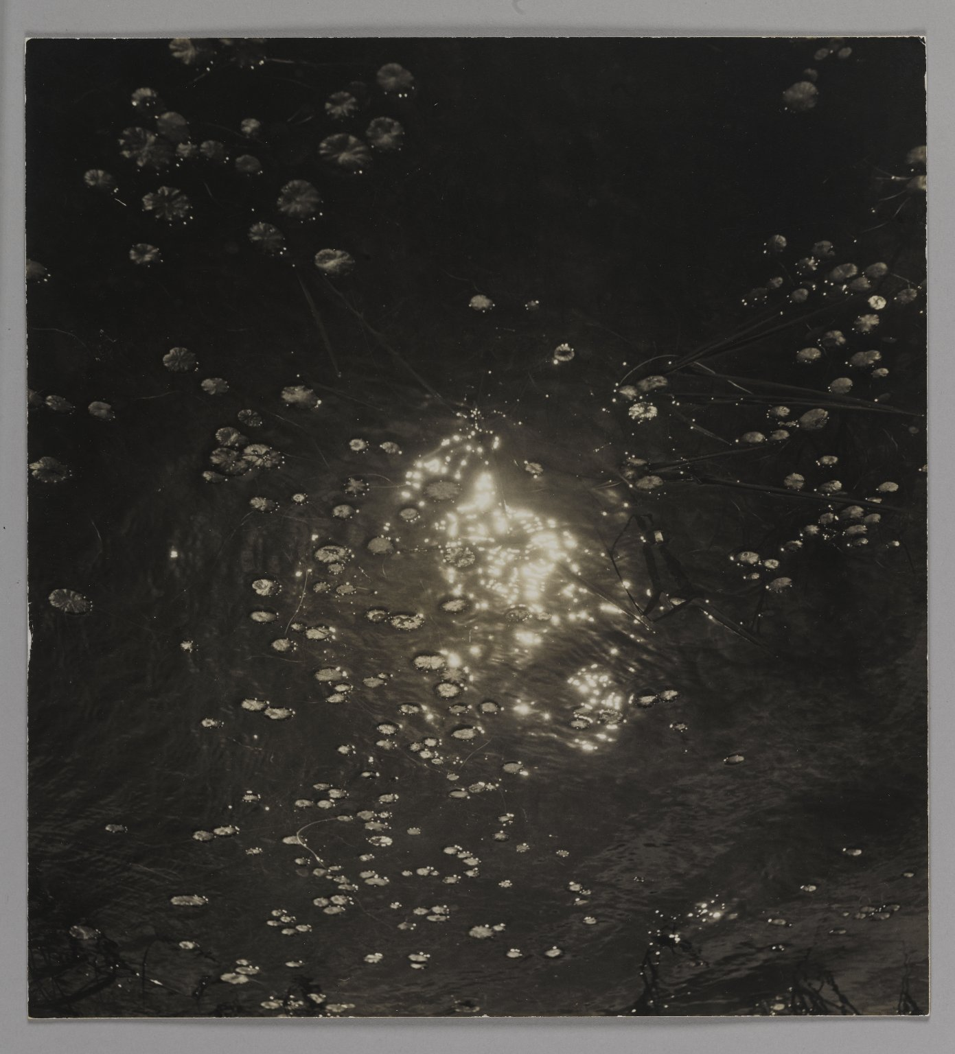 Brooklyn Museum: [Untitled] (Lily Pads on Pond)
