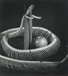 Pierre Jahan. Snake Skeleton with Apple, Early 1950s. Vintage gelatin silver photograph, 9 1/2 x 8 3/8 in. Brooklyn Museum, Gift of Eileen and Adam Boxer, 1989.190.1. © artist or artist's estate