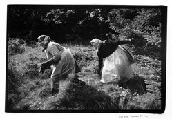 Lida Suchy. Legnava II, Ruthenia, Slovakia, Peasant Women With Scythes, 1988, printed 1990. Gelatin silver photograph, sheet: 16 x 20 in. Brooklyn Museum, Gift of the artist, 1994.180. © artist or artist's estate