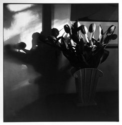 Bruce Cratsley (American, 1944-1998). Terry's Tulips, 1985. Selenium-toned gelatin silver photograph, image: 9 1/2 x 9 1/4 in. (24.1 x 23.5 cm). Brooklyn Museum, Gift of Jonathan L. Fagin, 1995.207.9. © artist or artist's estate
