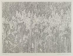 Richard Claude Ziemann (American, born 1932). Wetland Grasses, 1980. Stiple engraving, 9 x 12 in. (22.9 x 30.5cm). Brooklyn Museum, Bequest of Mrs. Carl L. Selden, 1996.157.21. © artist or artist's estate