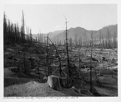 Frank Gohlke (American, born 1942). Old Clear Cut in Clearwater Creek, 1981. Gelatin silver photograph, Image: 13 x 15 3/4 in.  (33.0 x 40.0 cm). Brooklyn Museum, Gift of Robert L. Smith and Patricia L. Sawyer, 1999.127.1. © artist or artist's estate