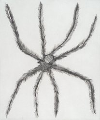Louise Bourgeois (French-American, 1911-2010). Hairy Spider, 2001. Drypoint, Sheet: 19 x 16 in. (48.3 x 40.6 cm). Brooklyn Museum, Robert A. Levinson Fund, 2003.14. © artist or artist's estate